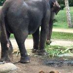 Photo of Elephant Safari Park & Lodge