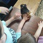 Petting Guinea Pigs