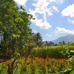 Jatiluwih Green Land Foto