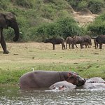 While on the boat trip on Kazinga channel