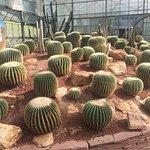 Photo of Queen Sirikit Botanic Garden