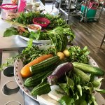 Beautiful plates of fresh veggies and herbs.