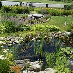 garden, pond & waterfall, beside dining patio