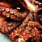 Octopus - Polipo