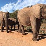 Photo of Schotia Safaris Private Game Reserve