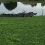 Photo of Kissimmee Bay Country Club