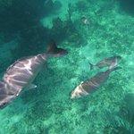 Snorkling at Tulum