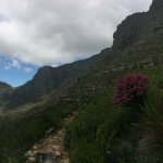 Table Mountain National Park Foto