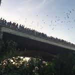 8:15pm bats starting to come out by the thousands