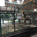 Photo de Tiger Kingdom