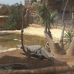 Foto de Zoo Cocodrilo Park