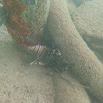 Photo de Augusta Bay Bahamas