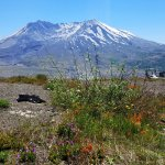 Plant life is starting to recover near Mount St Helens