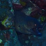 Moray eel keeping an eye on us
