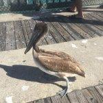 Wildlife on the pier