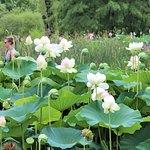 Beautiful flowers at the Kenilworth Aquatic Gardens