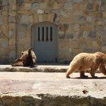 The very popular bears