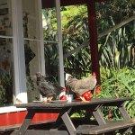 Photo of Huia Beach Store & Cafe