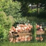 Photo de ARTIS Amsterdam Royal Zoo