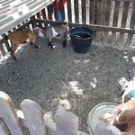 Animales en la granja (Camping ecológico Lava)