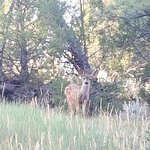 natural setting. Wildlife behind hotel. Fawn