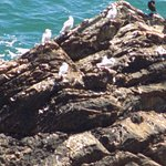 Sea birds on the rocks below