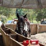 Horse at Jayelle Ranch