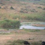 Photo of Buckler's Africa