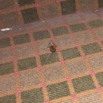 Filthy/Disgusting/Bug infested flop hotel-Beware: just a few of the amenities of Best Western. T