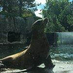 Foto de Rotterdam Zoo
