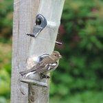 A busy garden feeder