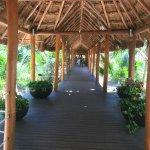 Precioso puente ecológico que cruza todo el hotel rodeado de una flora espectacular