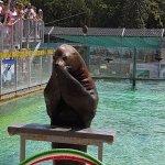 Nyiregyhaza Animal Park