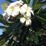Foto de Kempinski Seychelles Resort