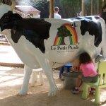 nouveauté de l'été : on traie la vache comme à la ferme !!