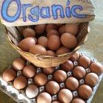 Organic Farm Fresh Eggs!