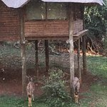 Photo of Zululand Tree Lodge