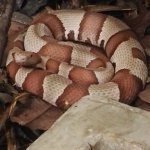 Foto de Arenal Eco Zoo
