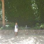 Beautiful wall of greenery