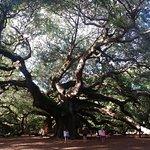 Beautiful view of the Angel Oak tree