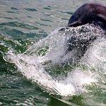 Little Toot Dolphin Adventures Foto