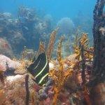 Nice reef