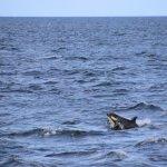 amazing orcas