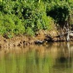 Photo of Pantanal Nature