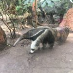The Buffalo Zoo