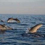 Dolphins tour