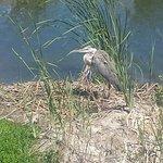 tons of native bird species active in this oasis