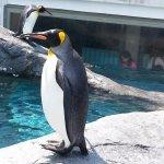Asahiyama Zoo - see penguin within 2 meters