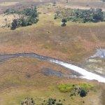 Okavango Delta Foto