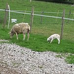 Hazels Farm Bed & Breakfast Photo